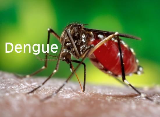 Vigilancia, prevención y control sobre el Dengue.