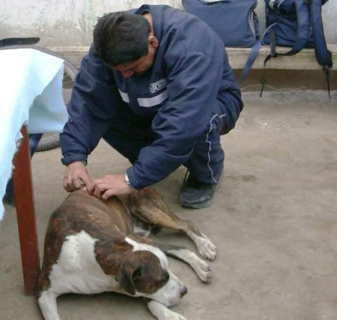 Zoonosis un reto para el CDC Perú -  6 de julio Día Mundial de la Zoonosis