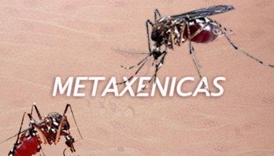 Photo of Vigilancia epidemiológica de las enfermedades metaxenicas
