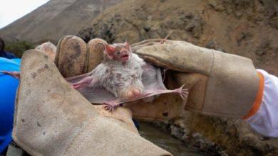 Photo of Más de 2 mil casos de enfermedades zoonóticas investigadas